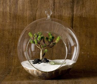 | Trend Living's Glass Orb Terrarium |