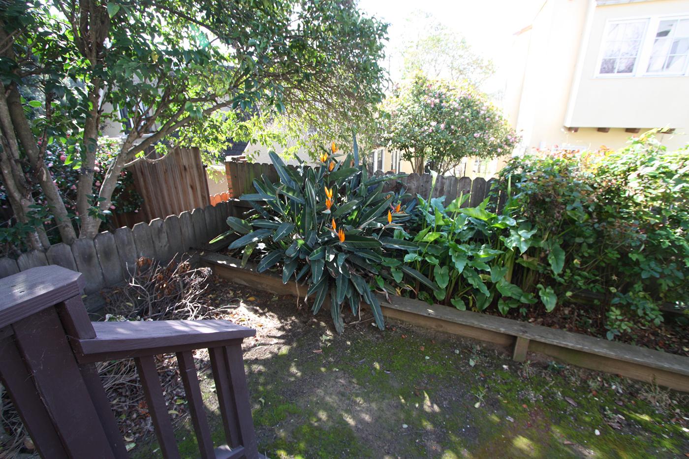 backyard-before-2