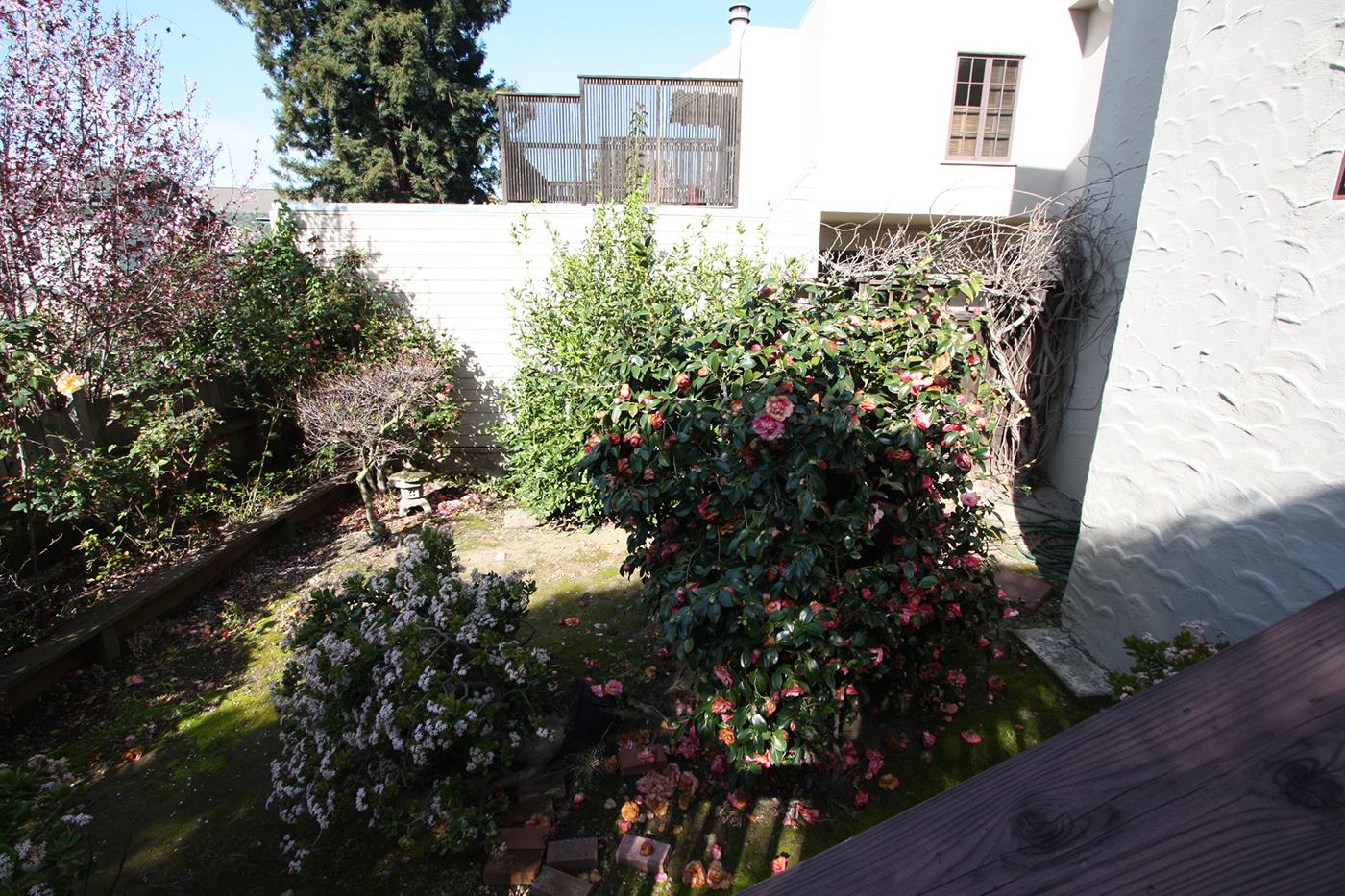 backyard-before-3