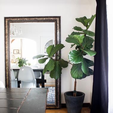 Home Trends | Indoor Plants