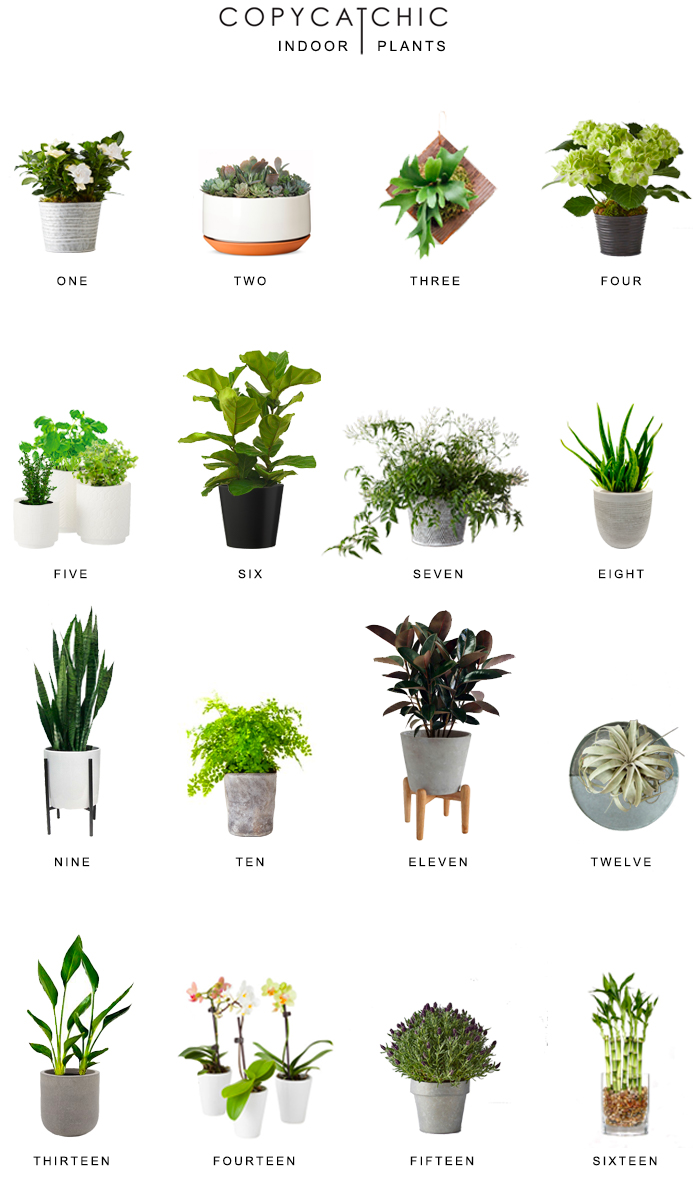 Home Trends Indoor Plants Copy Cat Chic